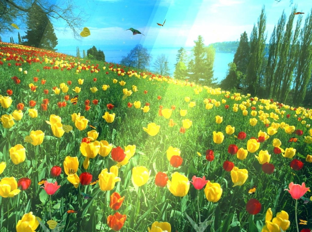 3d-animated-hd-wallpapers-by-mydesignbeauty-17
